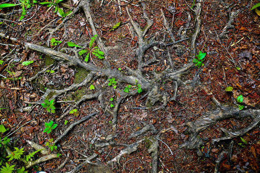 Nature's Web