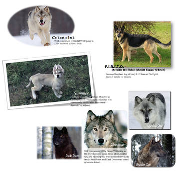 Canine Companion Collage by KristenAxley411