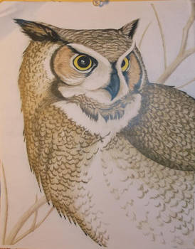 Owl Drawing, colored