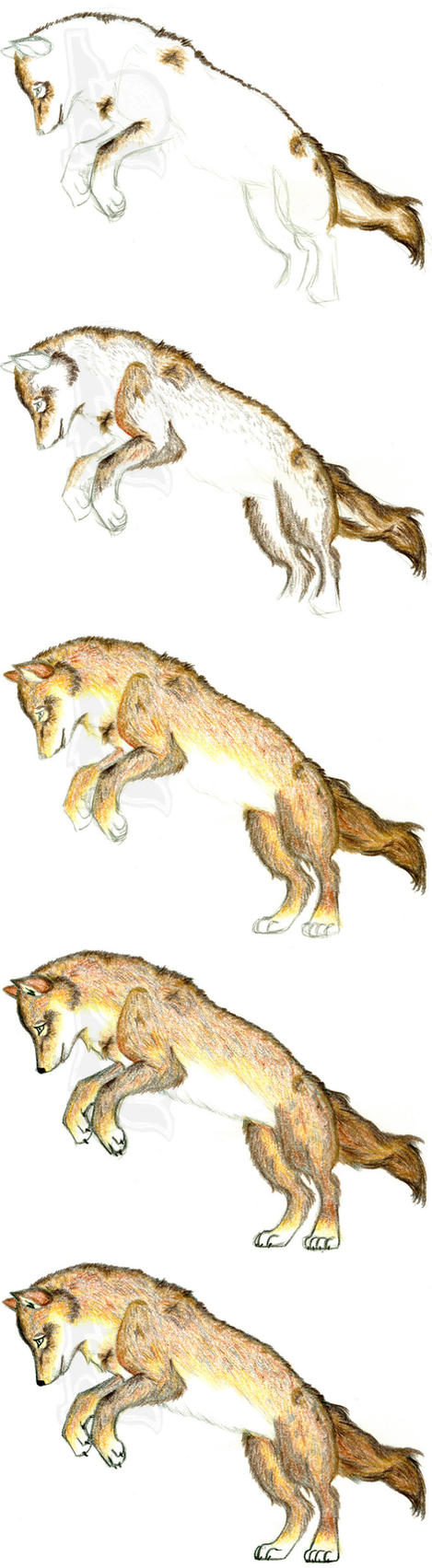 How to Draw a Realistic Wolf by schoolofwsm