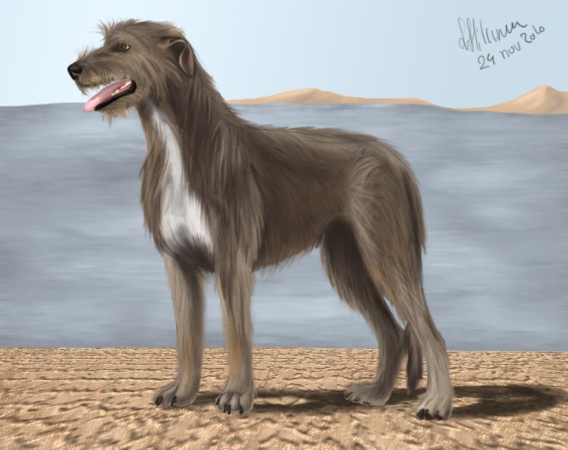 Irish wolfhound 2 by fiffiluren
