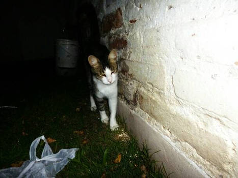 Cat Stalker