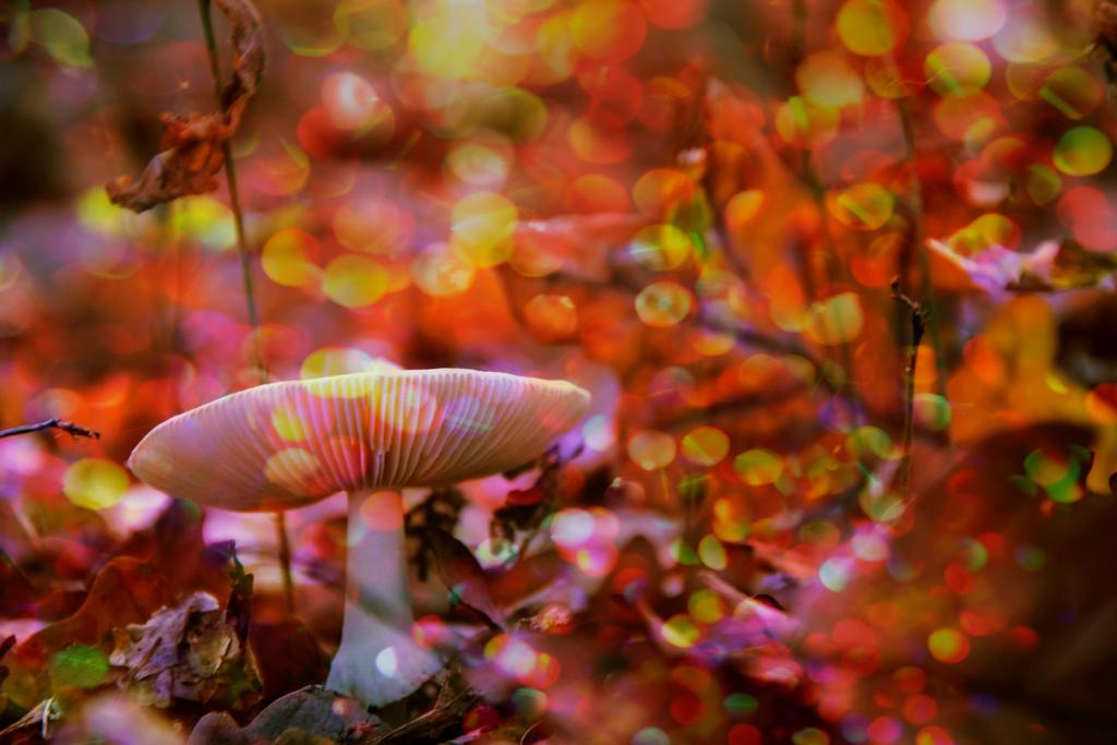 Sweet Autumn by SomethingNotMatter