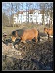 ...::Horses::...