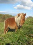 :My horses 15: