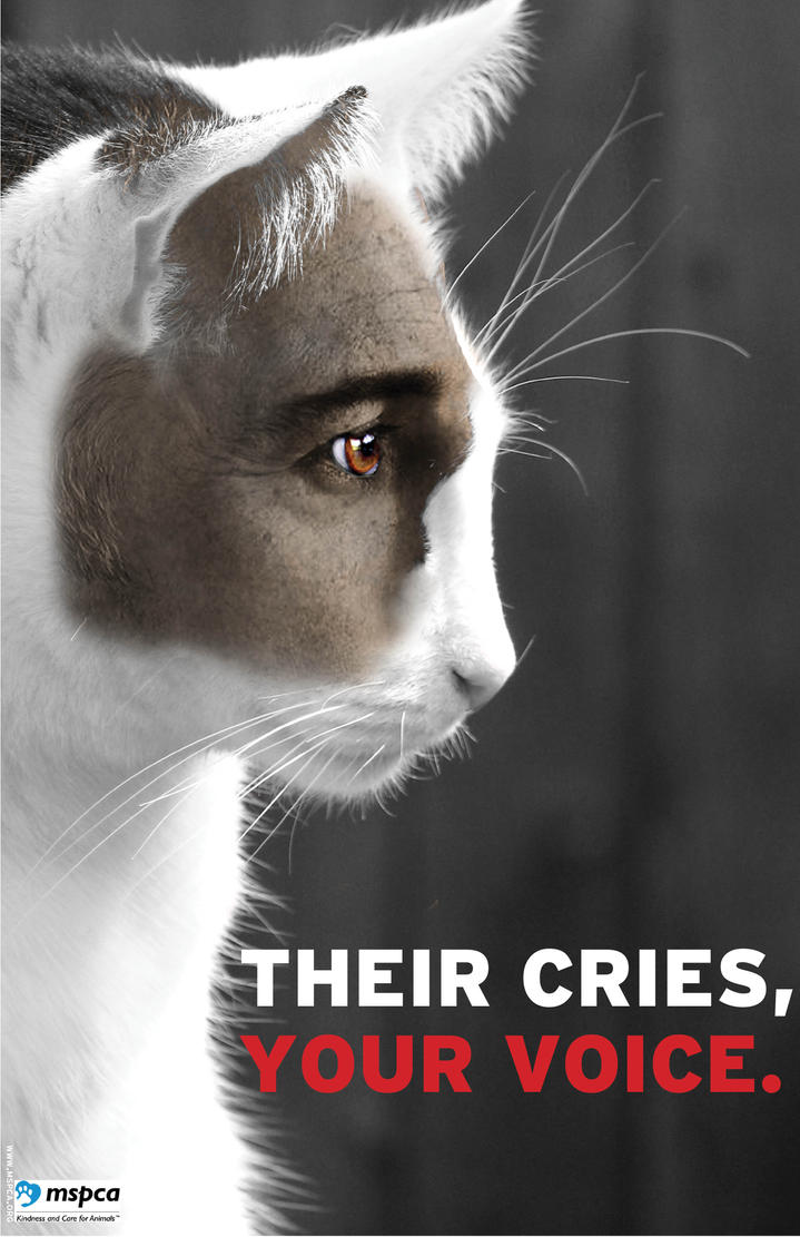 Animal abuse posters - photo#4