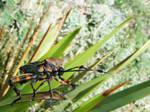 Black with orange bug 2