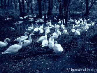 Birds Of Twilight by WalkMyPath