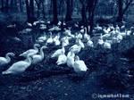 Birds Of Twilight