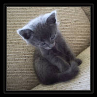 Little Kitty VI by LunaNero