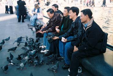 Feeding Birds by hollystone