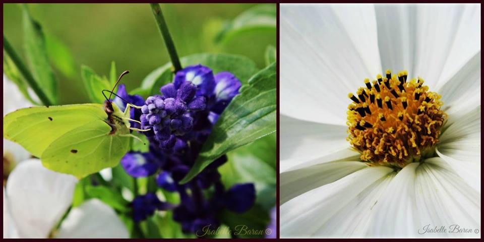 Butterfly/Flower by Baronart
