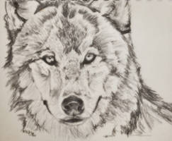 Wolf by totalserenity1