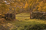 Rural autumn.