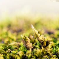 Inside moss. by MarioGuti