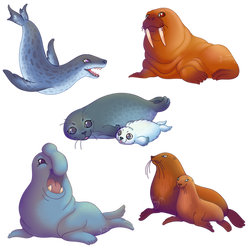 #2 Pinnipeds by Bestary