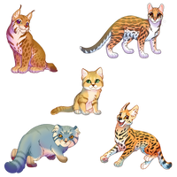#3 Small caterwal :D