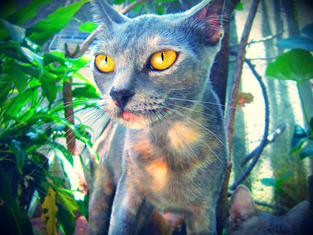 My other cat, ''Magrela'' by Dezeer