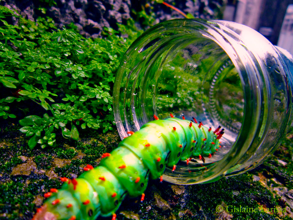 Different Caterpillar #2 by Dezeer