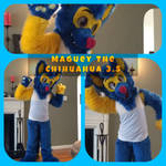 FURSUIT - Maguey The Chihuahua 3.5