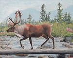Woodland Caribou by ChristinaPrice