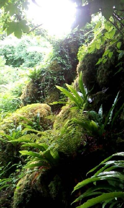 Irish Rainforest by 10fang711