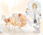 YnM: Size of drosophilas