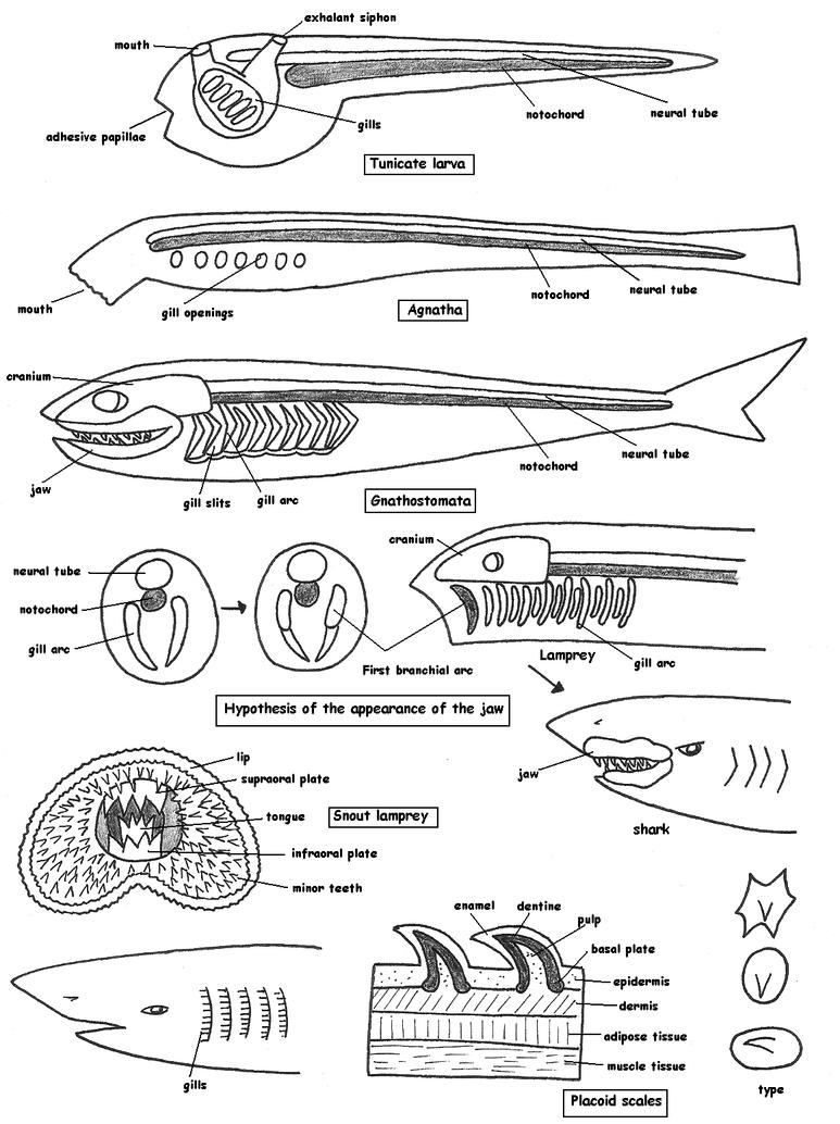Fish Anatomy Vol 1 By Maleiva On Deviantart