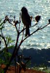 Photo of a bird by Maleiva