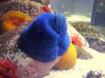 photo of an aquarium by Maleiva