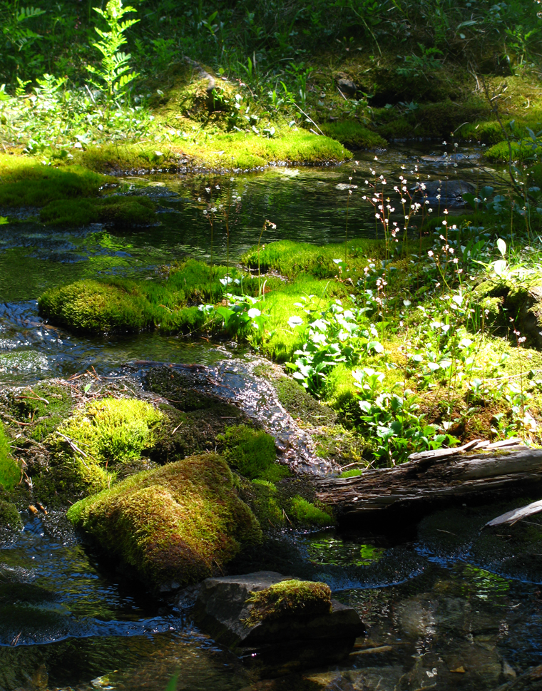 Crowdfund to buy native plants on Creeklife.