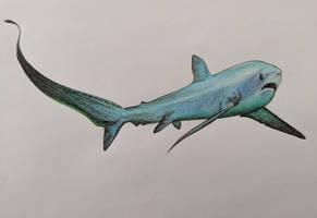 Thresher Shark by Undead-Oreo