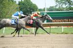 Racehorse Stock 58