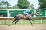Racehorse Stock 70
