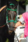 Racehorse Stock 141