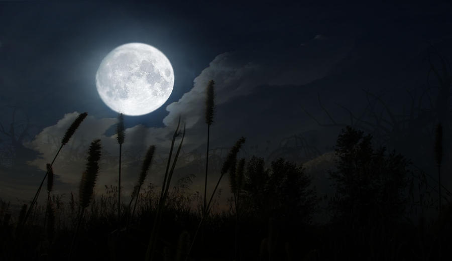 Image result for night time in the forest