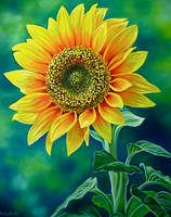 Sunflower by TernFeather
