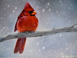Winter Cardinal by TernFeather