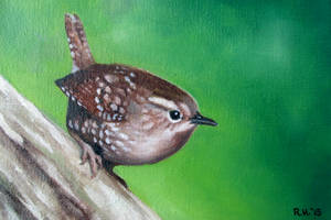 Winter Wren by TernFeather
