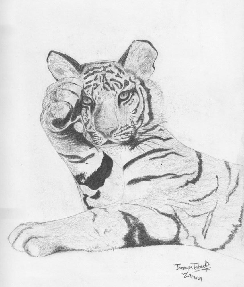 Tiger by Thereysa