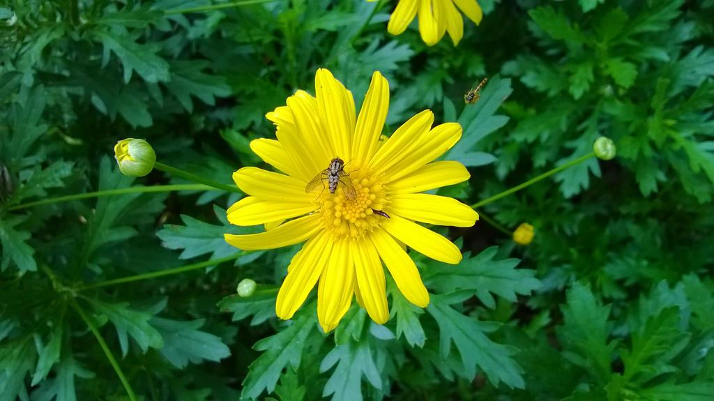 Flower by leocolorado