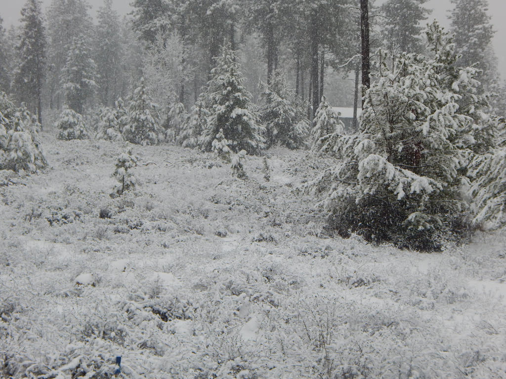 Snow Days Gone By by Musta-Eyolf-Pedes