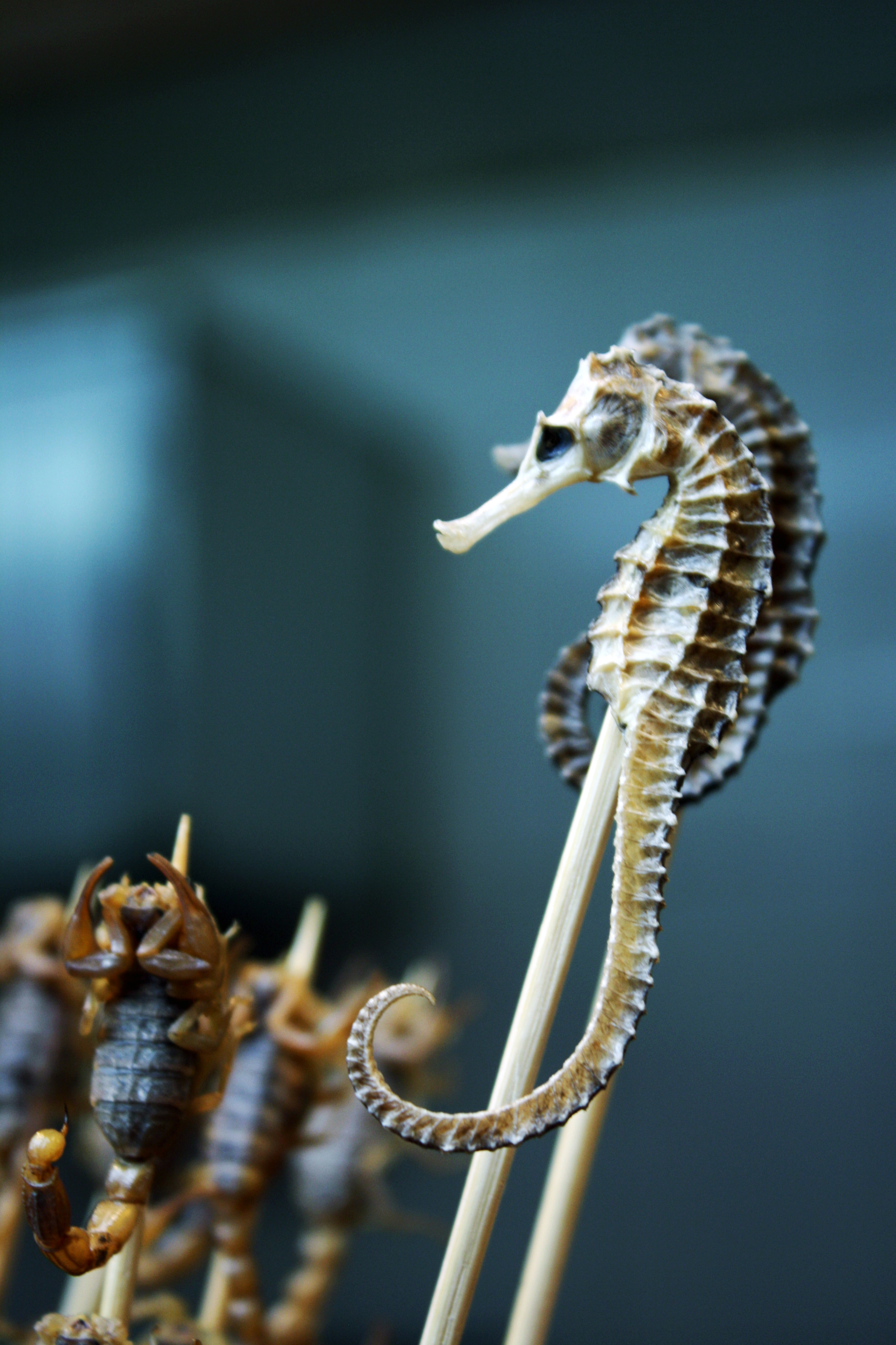 Seahorse on a Stick by Wh4T