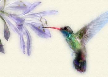 Photoshop Watercolor Hummingbird