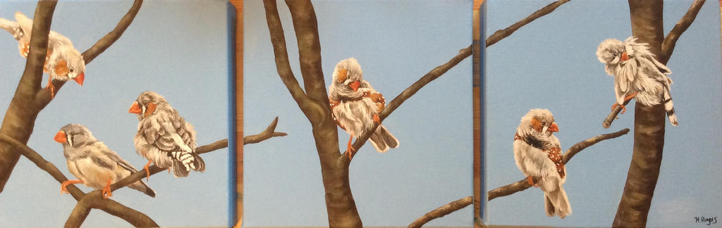 Zebra Finches by Helenr251