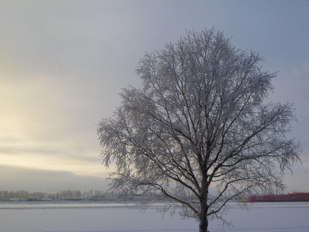 winter tree by 4ajka