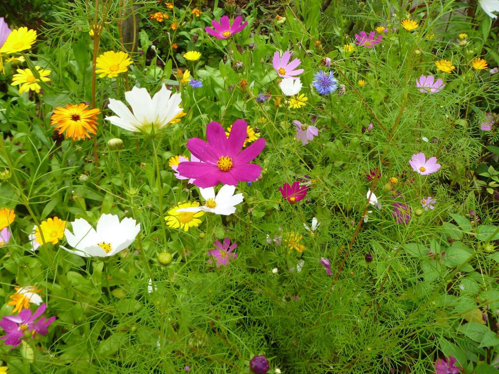 flowers by 4ajka