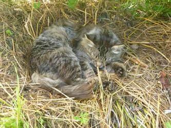 cat by 4ajka
