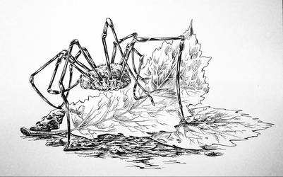 Daddy Long Legs by Temarinde
