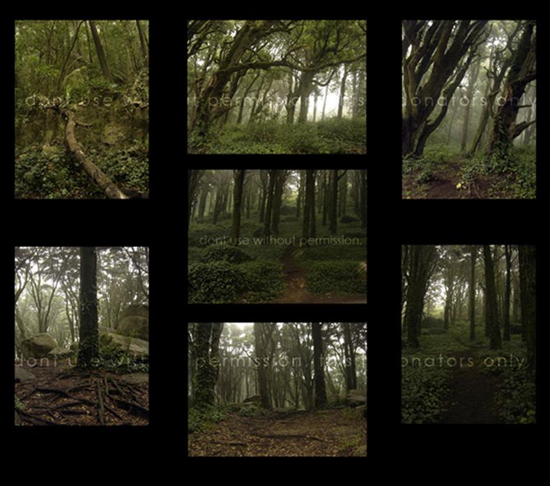 Dark-Forest by KittyD